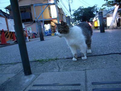 谷中 野良猫