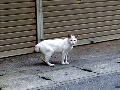 沖縄 白猫