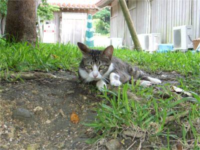 沖縄 野良猫
