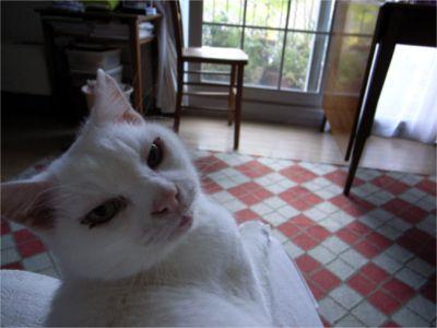 猫ちゃん 目の周り赤い