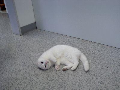 猫の看護婦さん