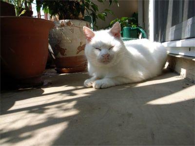 猫ちゃん 日光浴