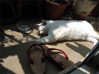 猫ちゃん 熟睡