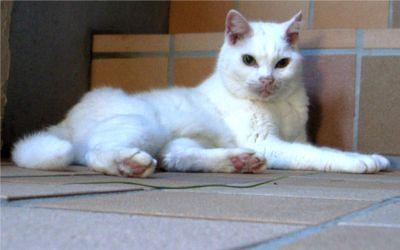 廊下で涼む猫ちゃん