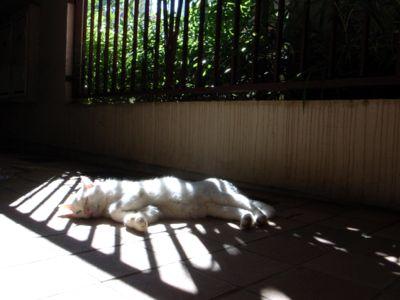 廊下でぐっすりの猫ちゃん