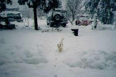 雪の日の猫ちゃん
