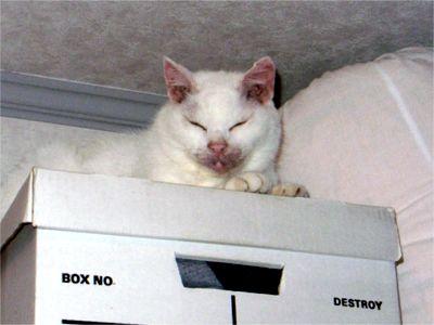 OK出し 猫ちゃん