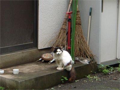ほうき 猫