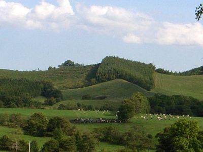 八千代牧場 放牧風景
