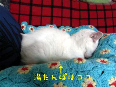湯たんぽ猫ちゃん