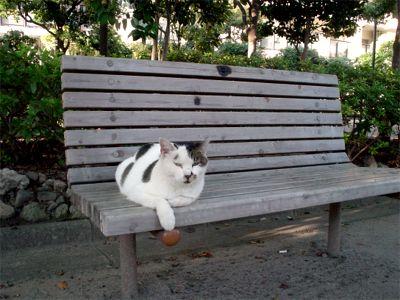 くつろぎベンチ猫