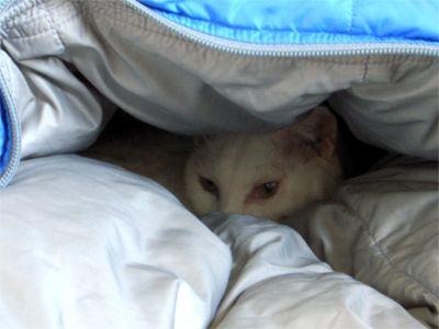 寝袋 猫ちゃん