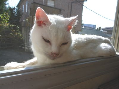窓の桟にすっぽり 猫ちゃん