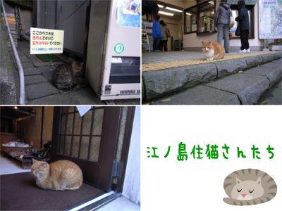 江ノ島住猫さん