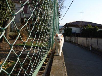 猫ちゃん散歩 行き1