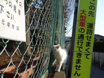 猫ちゃんの散歩 行き2