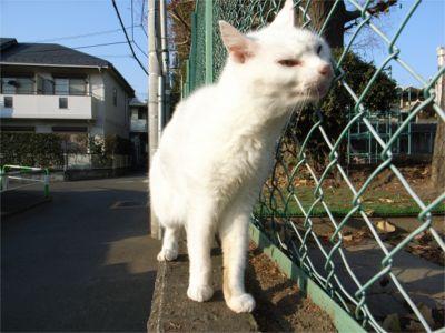 猫ちゃんの散歩 帰り1