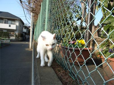 猫ちゃんお散歩 帰り2