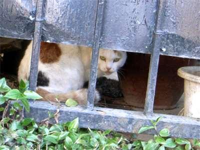 世田谷 野良猫