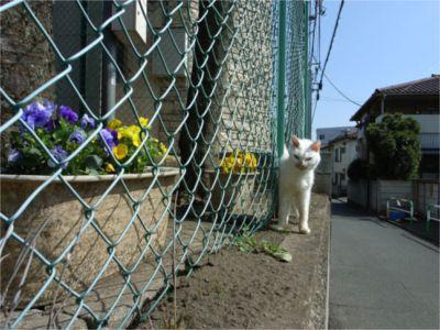 2008.3.23 ねこちゃんお散歩