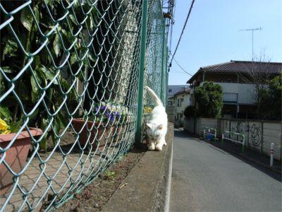 2008.3.23 ねこちゃんの爪とぎ
