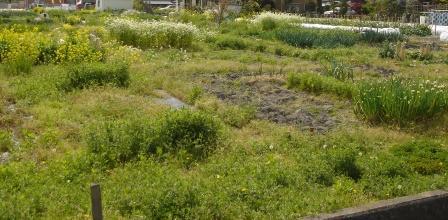 道路からの畑 20070427