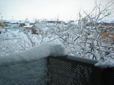20091219 どさっと落ちた雪