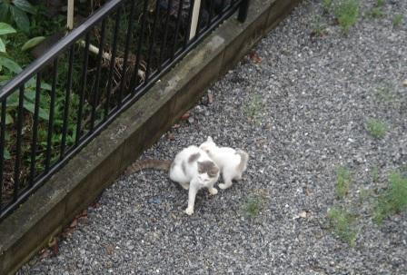 20100628 激写!ネコの親子2.JPG