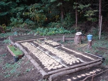 20101109 畑