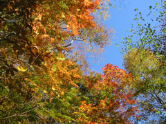 登山口付近の紅葉