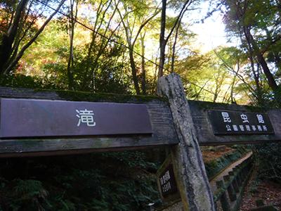 紅葉(箕面|2010年)