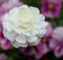 花【横】16.JPG