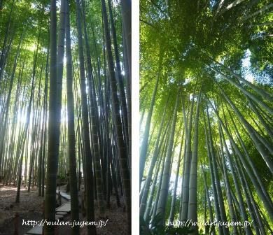 竹の寺.jpg