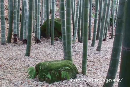 竹石.jpg