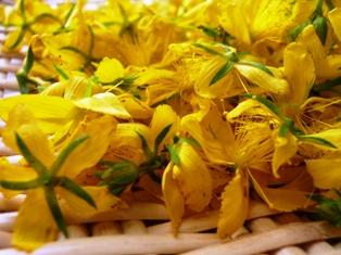 セントジョーンズワート花