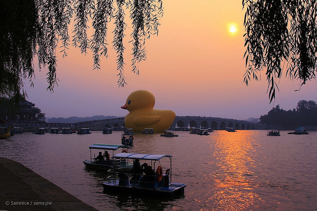 duck-w-2013beijing2_mini.jpg
