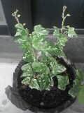 謎の植物050814