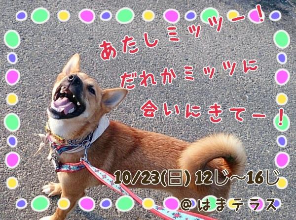 16-10-16-18-09-57-535_deco.jpg