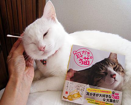耳かき猫 ノビアさん