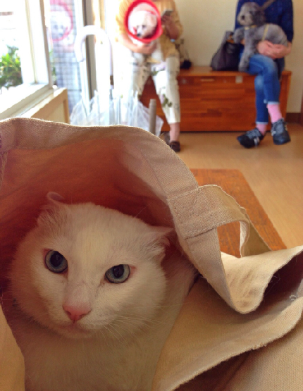 ノビア 白猫 動物病院