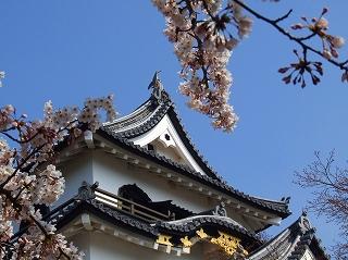 20070408彦根城と桜