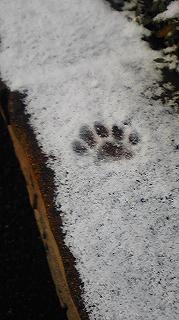20080118 雪の朝