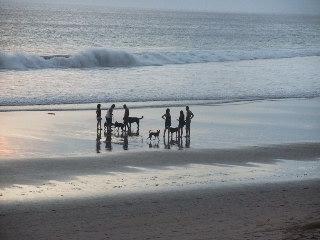 ビーチの散歩たくさんの犬