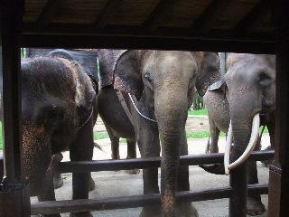 大人の象達