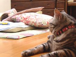 琢くんが寝ているのを見守る虎之介さん