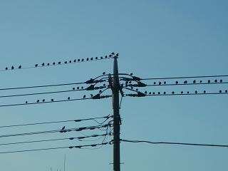 実家へ帰る途中の空と鳥