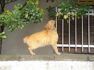 鶯谷の猫ちゃん