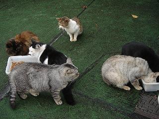 谷中TORIYAの前の猫