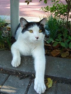 中野屋の前の猫ちゃん1