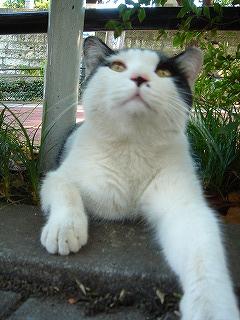 中野屋の前の猫ちゃん2
